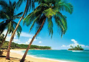 Fototapetti 8-os. Tropicale