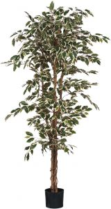 Silkkikasvi Ficus Hawaii 180 cm