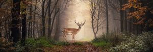 Sisustustaulu Reinders Majestic Deer