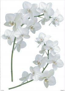 Seinätarra Plage S Orkidea