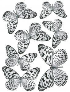 Staattinen Tarra Plage Mustavalkoiset Perhoset