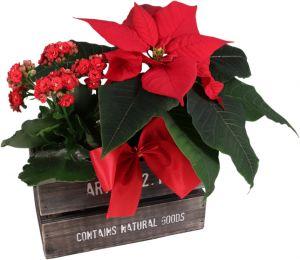 Joulutähti laatikossa