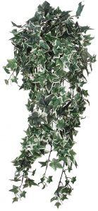 Silkkikasvi muratti 80 cm