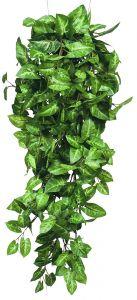 Silkkikasvi pitsilehti 80 cm