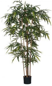 Silkkikasvi bambu muoviruukussa 180 cm