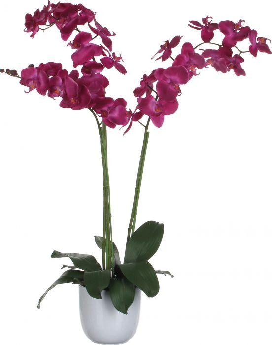 Silkkikasvi Perhosorkidea Violetti 100 cm