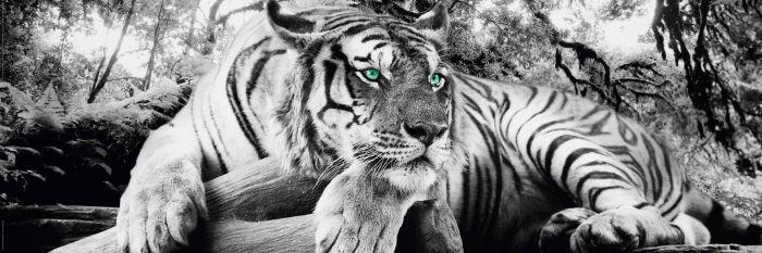 Sisustustaulu Reinders Tiger is watching you 30 x 90 cm