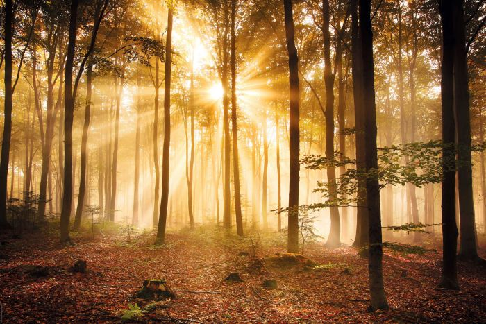 Sisustustaulu Reinders Enlightened Forest
